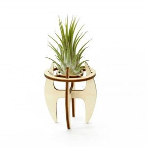 Air plant holder Small - Holder small 500x500