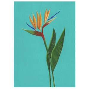 BIRD OF PARADISE Greeting Cards, pack of 6