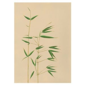 BAMBOO Greeting Cards, pack of 6