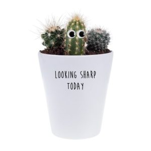 Looking Sharp Today House Plant Pot, Plant & Growing Kit - FINAL Looking Sharp Today cactus NP with googly eyes 500x500