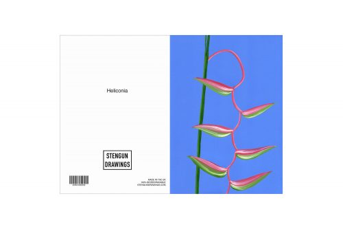 HELICONIA Greeting Cards, pack of 6