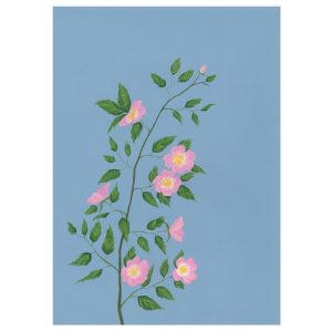 ROSSES Greeting Cards, pack of 6