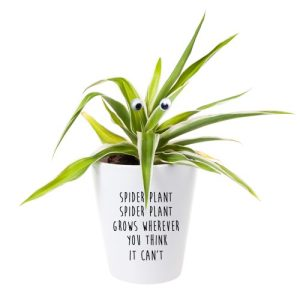 Funny Spider Plant Planter - Spider plant grows wherever 500x500