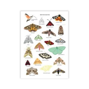 British Moths Art Print
