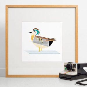Baikal Teal Duck Giclee Print - Baikal Print 500x500