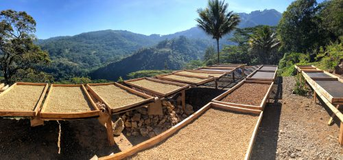 Timor Leste Werema Village (Washed) Moka and Typica. Sweet and Complex. Espresso and Filter. Wholebean