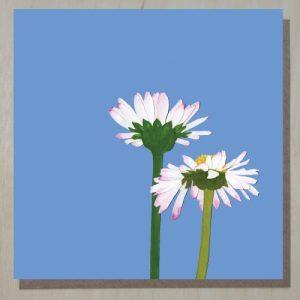 English Daisy Card (bellis perennis) (bundle of 6)