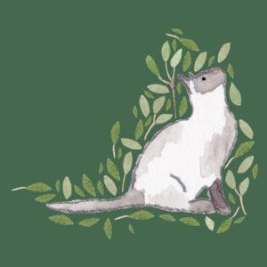 Ragdoll Cat blank greeting card - rag doll cat image 500x500
