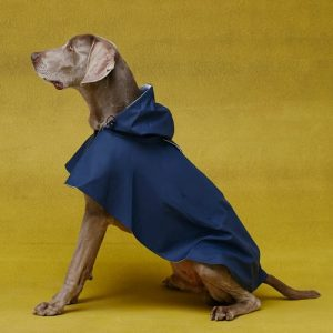 William Dog Raincoat Blue