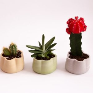 Jumony collection – container /cacti planter