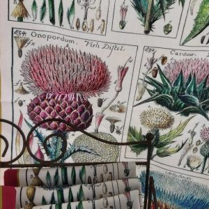 Thistle Antique Print Tea Towel 100% Cotton UK Made