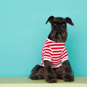 Stripped organic cotton David T-Shirt in Red Color