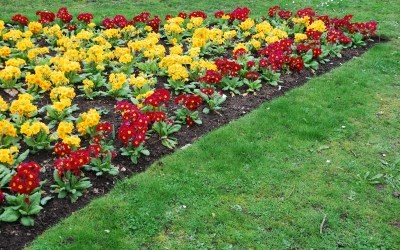 Curb Appeal: Green Lawns, Landscaping & Cash Returns