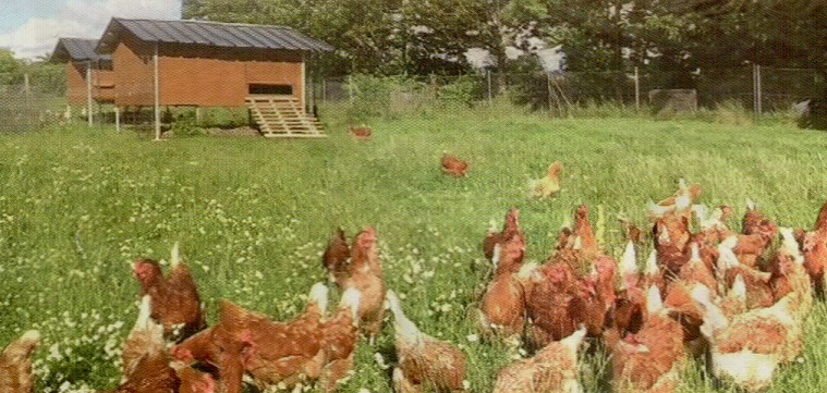 https://i0.wp.com/www.creperiedesaintmaurice.com/wp-content/uploads/2017/04/Poulailler-et-poules-2.jpg