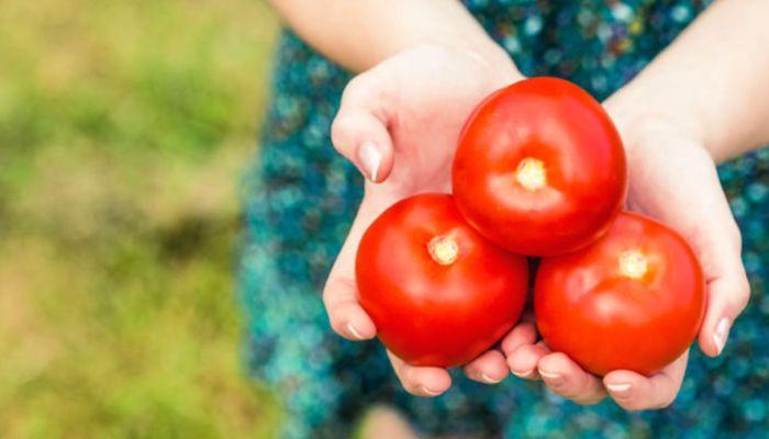 Νέα καλλιέργεια άγριας ντομάτας