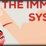 Πως λειτουργεί το ανοσοποιητικό μας