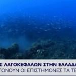 Νέα επίθεση λαγοκέφαλου στην Κρήτη
