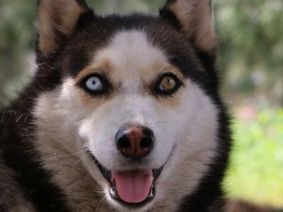 Πώς οι λύκοι εξημερώθηκαν σε σκύλους
