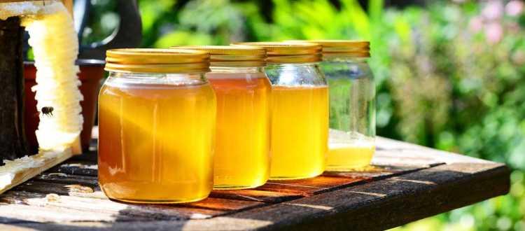 50% πάνω οι εξαγωγές μελιού προς τη Γαλλία