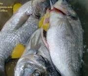 Ψάρια …