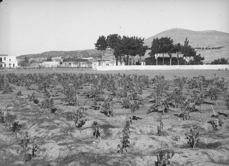 Κρήτη 1941. Οι νέοι αμπελώνες στο Σκλαβεροχώρι Ηρακλείου