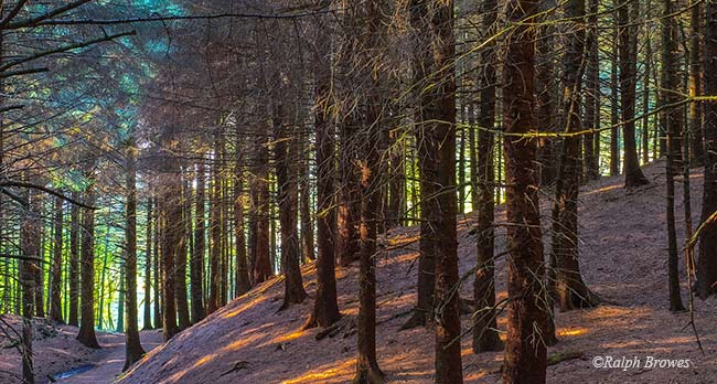 Colour_1_Sundown-in-Macclesfield-Forest_Ralph-Browes-web
