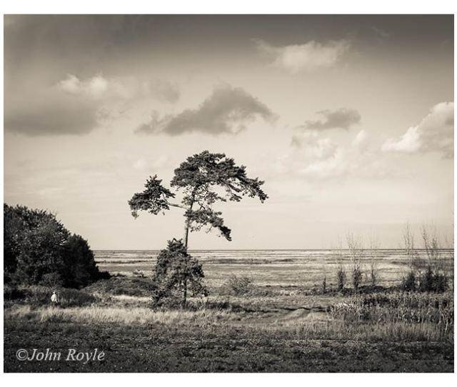 Landscape-AJR_web