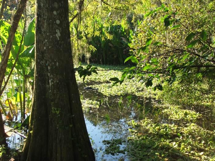 Bird Rookery Swamp pond