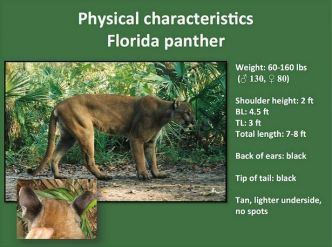 FWC Id panthers