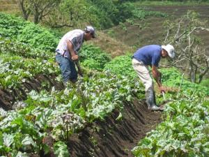 La agricultura es una de las actividades con menor nivel de dinamismo. CRH.
