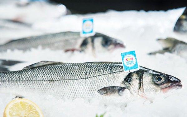 pescado sin anisakis