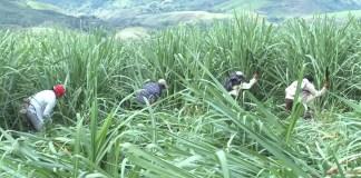 Continúan acciones de liberación de la madre tierra en el norte del Cauca