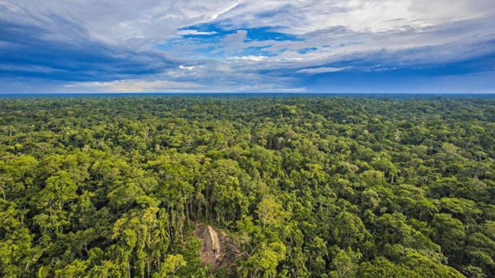 La Amazonía | Fuente: RICARDO STUCKERT