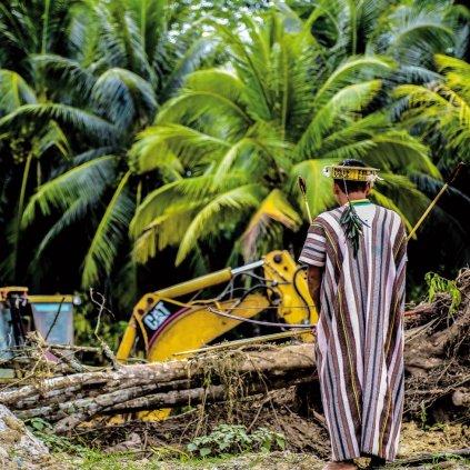 Un hombre ashaninka, de Perú, observa unos trabajos de tala. Esta etnia es la más numerosa y extendida de la Amazonia, y ha sufrido la sangrienta y despiadada guerra civil que lanzó a Perú al abismo en los años ochenta. Durante más de 20 años se produjo una verdadera carnicería de indígenas con más de 6.000 víctimas mortales contabilizadas (y las que nunca se encontraron) y más de 5.000 secuestrados. El terrorismo, el narcotráfico y las multinacionales que van tras los recursos naturales son las principales amenazas a las que se enfrentan. SEGUNDO CHUQUIPIONDO CHOTA SURVIVAL INTERNATIONAL