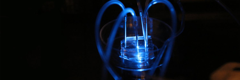 making lab crick