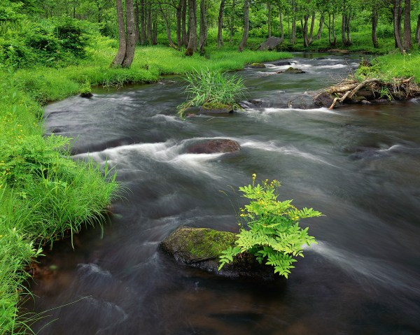 Stream Cascading Through Lush Forest ca. 2000 Fukushima Prefecture, Honshu, Japan