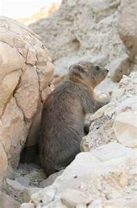 The Rock Badger