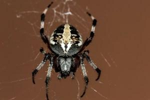 spider-195836_1920