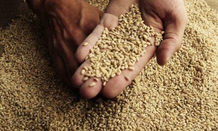 Gigante exportador de granos australiano hará pruebas con blockchain para su cadena de suministro