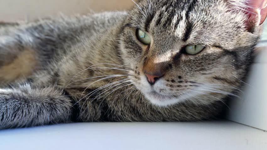 Pareja ofrece $100 mil en bitcoins para encontrar a sus gatos