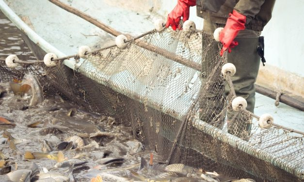 WWF registrará en blockchain el viaje de los peces del mar a tu mesa