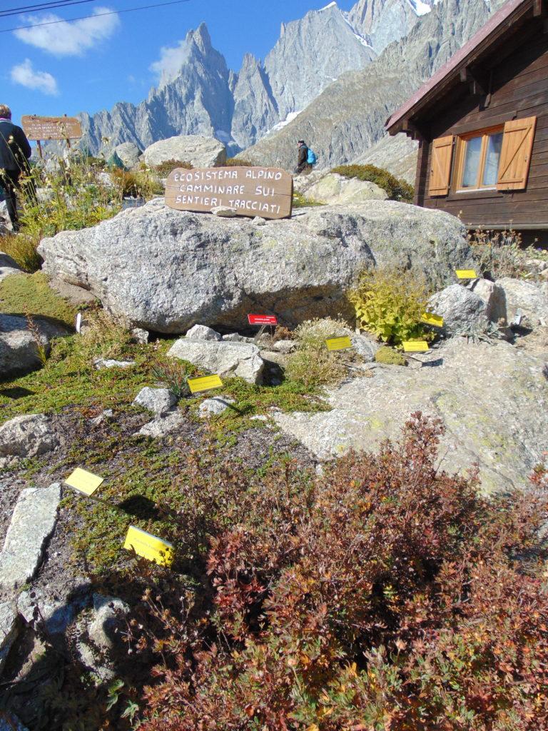 Giardino Botanico Saussurea Monte Bianco