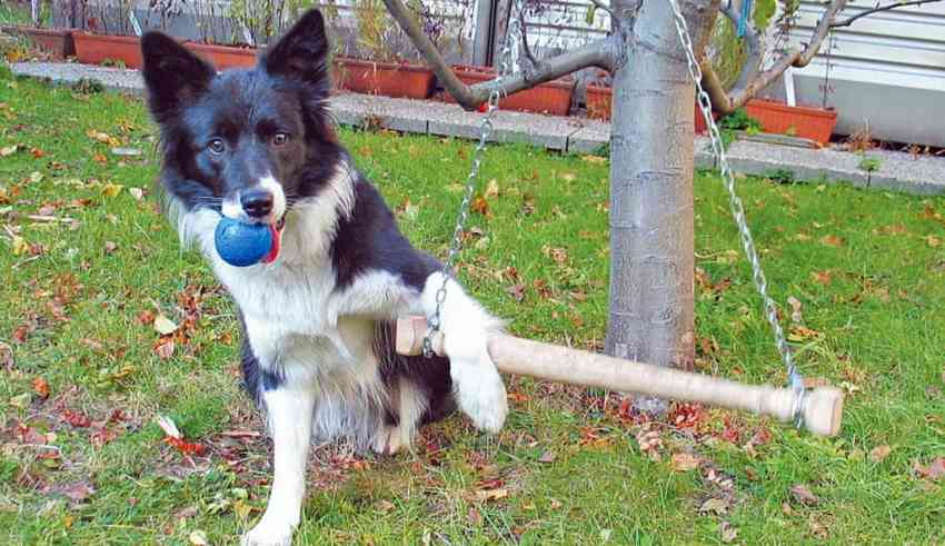 border collie exercise