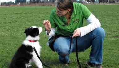 border collie training tips