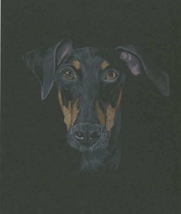 Carrie Walker dog portrait 1