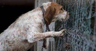 Multas por maltrato animal y zoofilia en Hidalgo