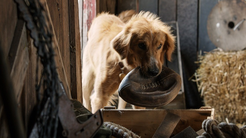 A Dog's Purpose third-party investigation finds no abuse 2