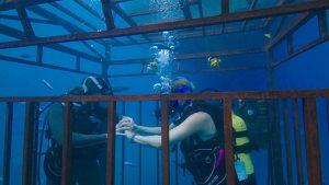 47 meters down - cage