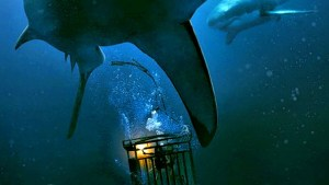 The cage snaps in 47 meters down