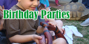 Reptile Birthday Party Los Angeles